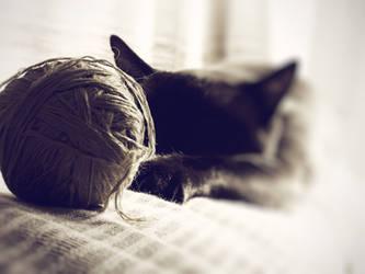 cat by pauart