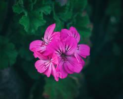 Vibrancy by cindywebbphotography