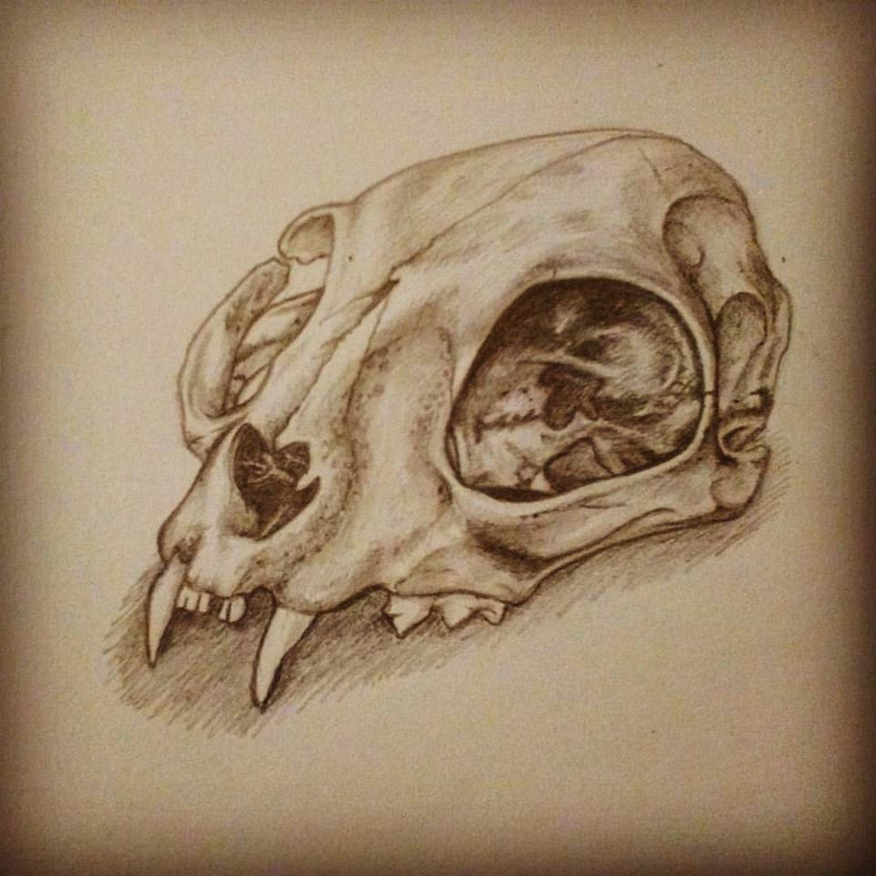 Cat skull by whitebunnyart on DeviantArt