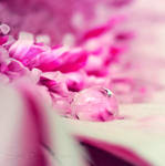Pink Paradise by Sarah-BK