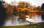 An Autumn Day By The Lake