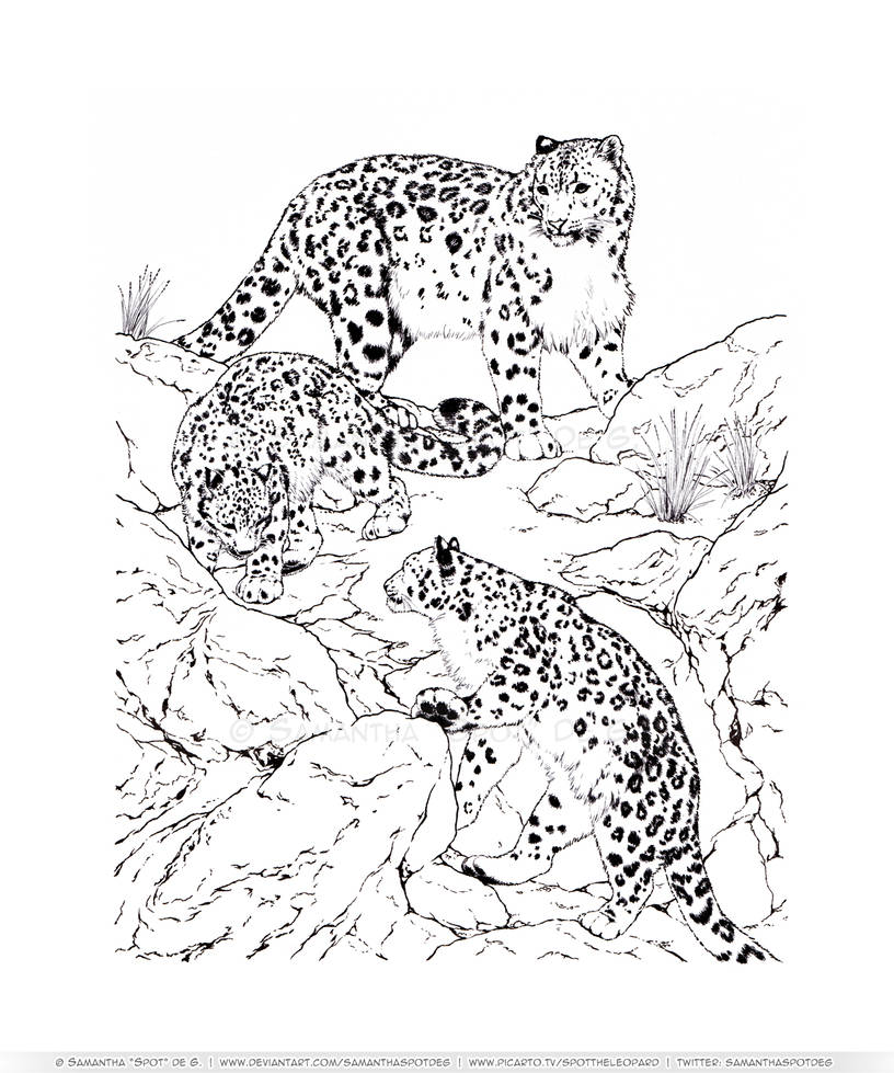 Snow Leopard Family Outing