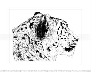 Snow Leopard Fluff