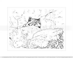 Snow Leopard Hiding Spot