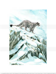 Snow Leopard - The Mountain Watch (color)