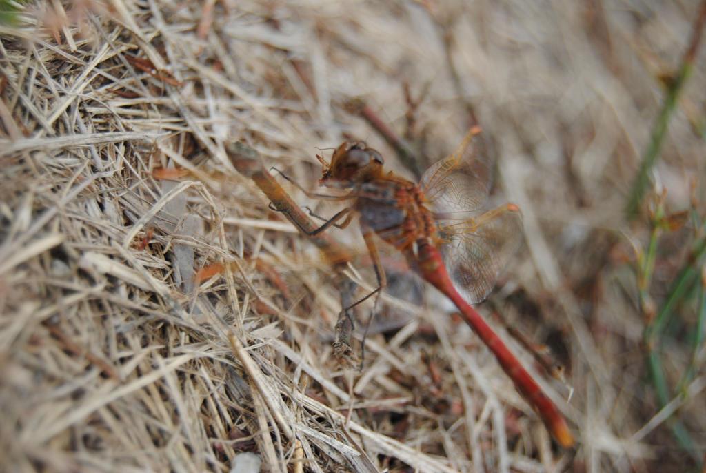 Liam's Dragonfly by phototeach1