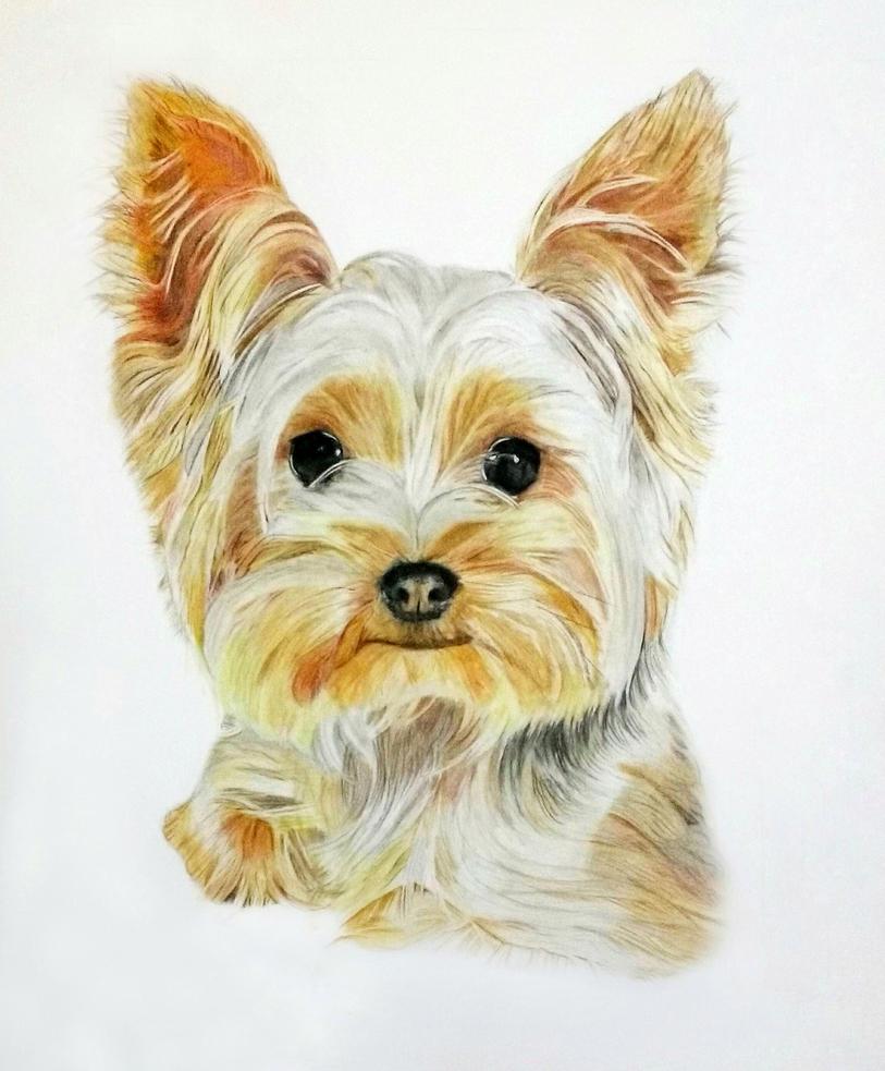Dog portrait by ni5hitha