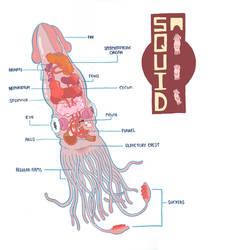 squid diagram by mrdynamite