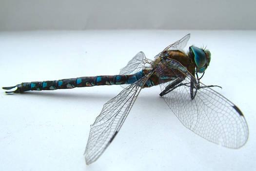 Dragonfly angle 1
