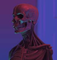 Skull Study by joelhustak