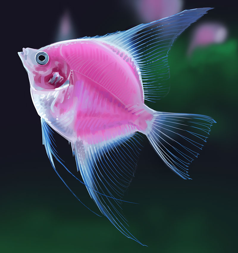Cool fish pictures to pin on pinterest pinsdaddy for Cool freshwater fish