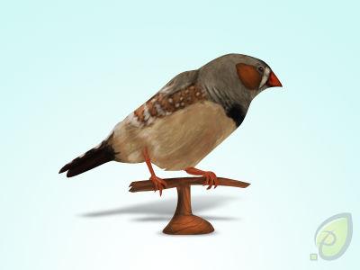 little bird icon free psd