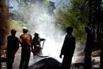 Road construction labourers