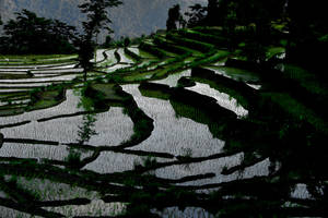 Paddy fields by bingbing51