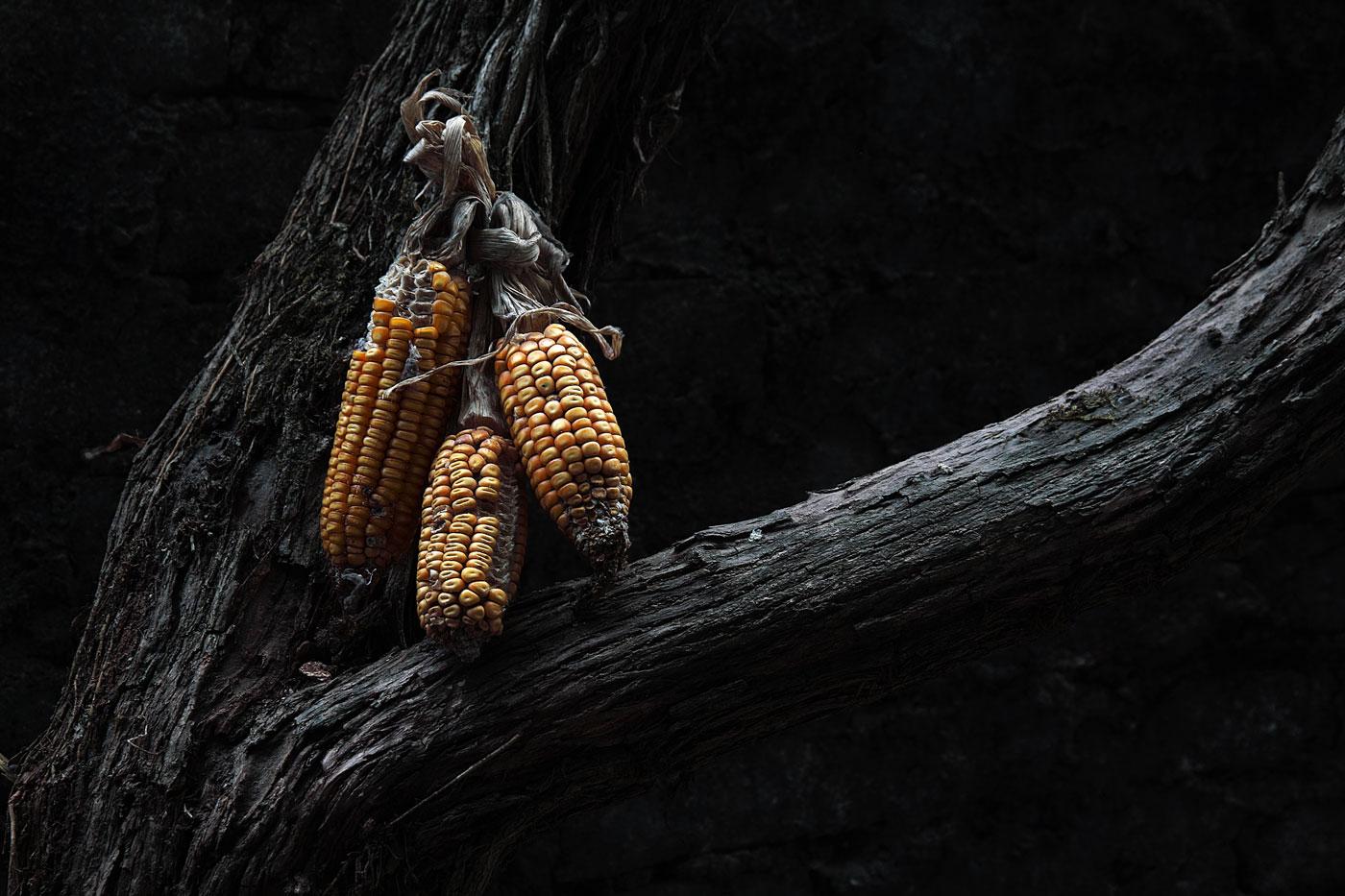 Corn by bingbing51