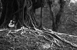 Wood .................. by bingbing51