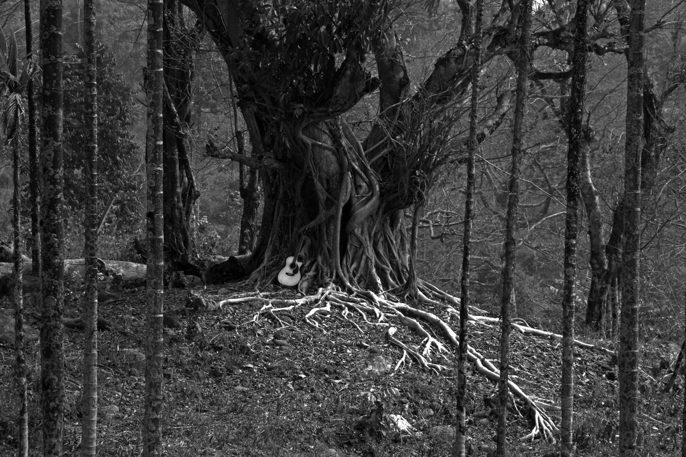 Wood ............ by bingbing51