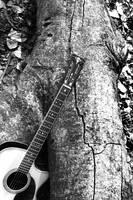 Wood ......... by bingbing51