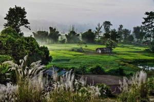 Rural Assam by bingbing51