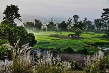 Rural Assam