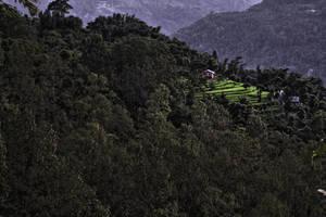 Forest Village in Kalimpong