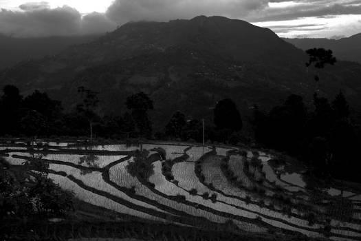 Ricefields.........