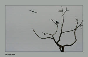 Crowz by bingbing51