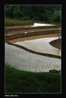 Ricefields 1 by bingbing51