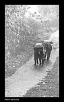 Rain by bingbing51