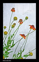 Flowers.. by bingbing51