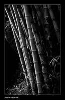 Bhalu Baans.. by bingbing51
