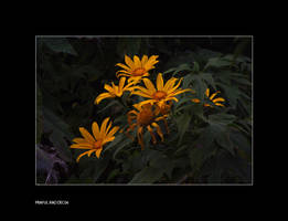 Gold in the garden by bingbing51