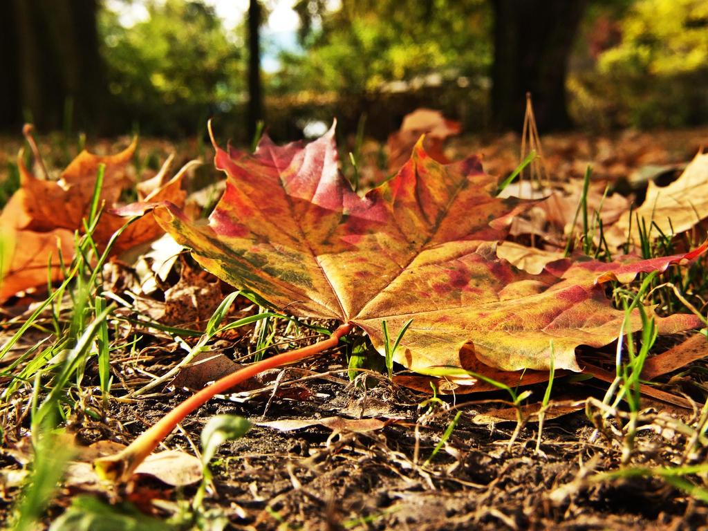 jpeg, Autumn by mission vao photography macro nature 2013 mission vao