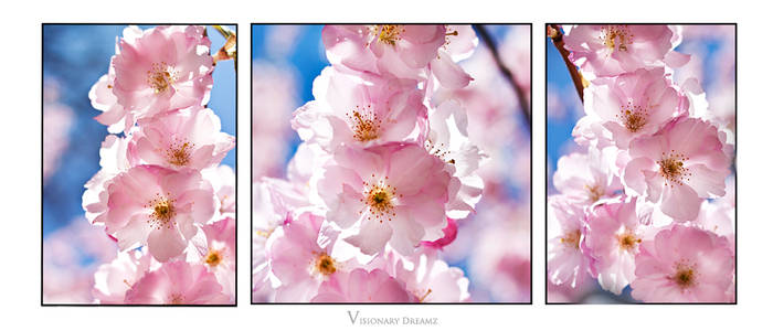 Sakura waltz II