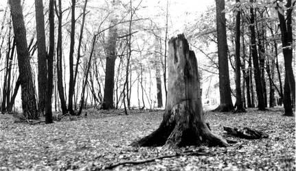 dead tree stump decaying