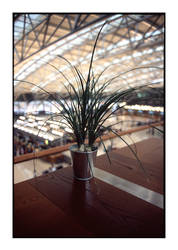 germany - airport nature by redux