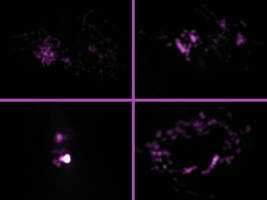 Infrared Remote by suricata5