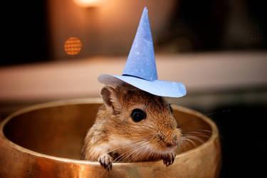 Little Wizard II by suricata5
