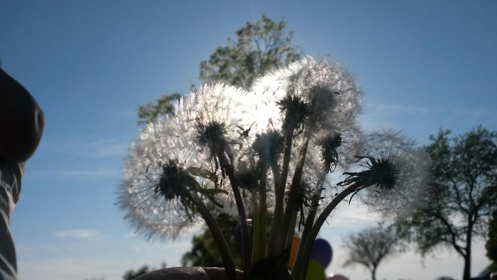 Wisher by DreamProphetess