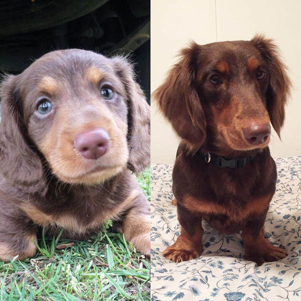 6 weeks to 1 year. by ICE46