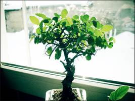 bonsai_two by HarvestBlackApples