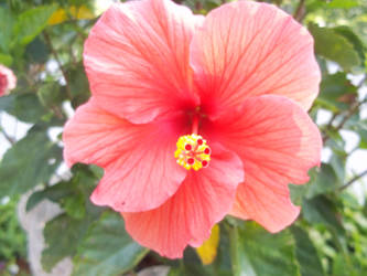 Aloha Flower by photographybymia
