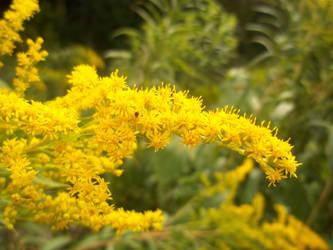 Tiny Yellow Flowers by photographybymia