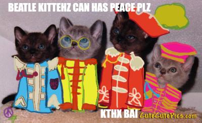 BeatleKittehsluvj00 by PeacestarRunner