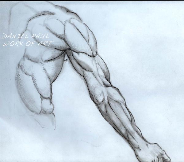 Arm Muscles By Dandanmuffinman On Deviantart