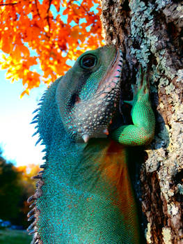 Autumn Lizard Alternate
