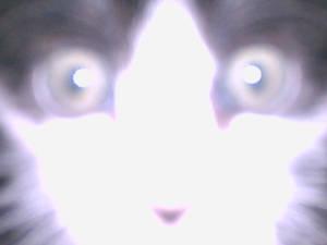 Hypno-cat