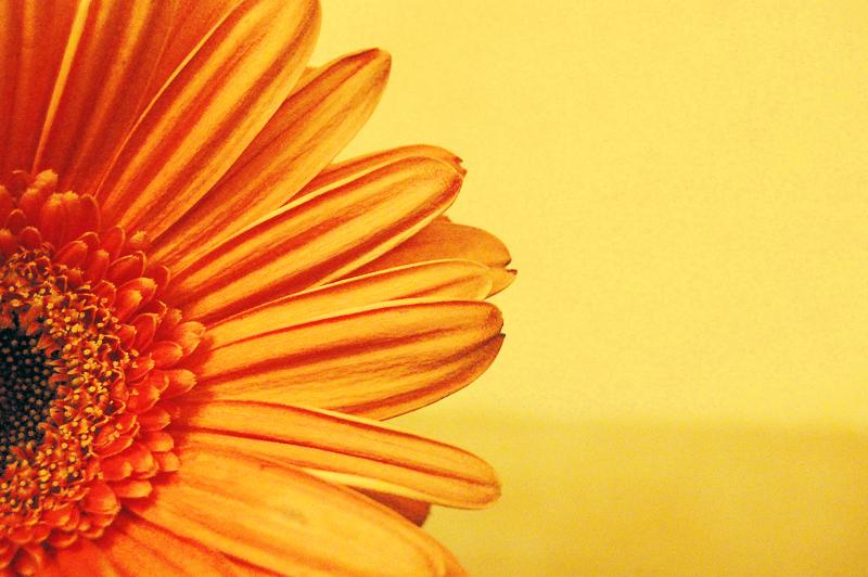 Flower My World.. by Orangish
