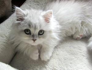 Lolita000's Profile Picture