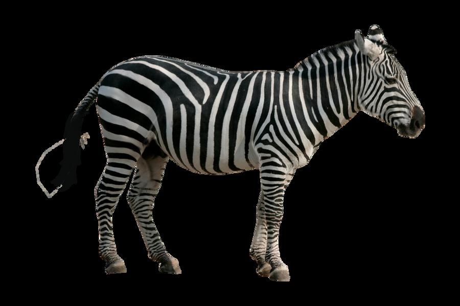 Done Zebra Pre-cut by  Zebra